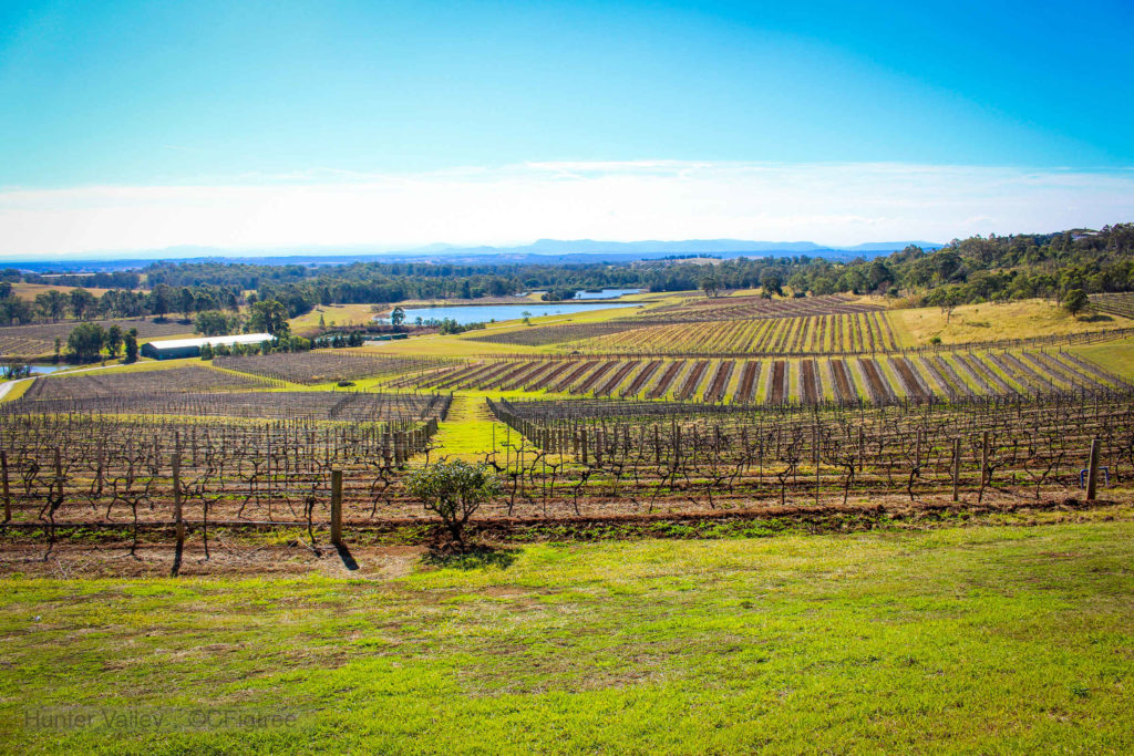 A view from Audrey Wilkinson Wines