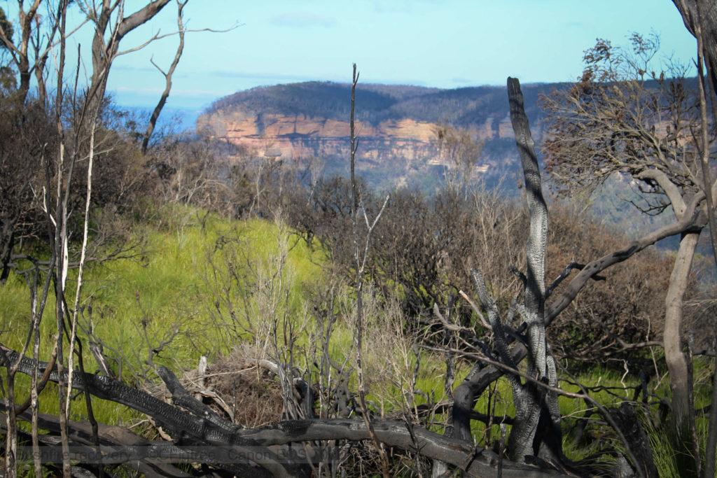 Bright green grassy sections amongst bushfire hit vegitation